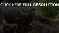 pelzigen schwanz lebensmittel eichhörnchen