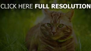 gras gestreifte katze