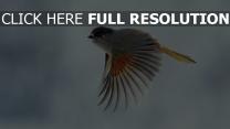 flug flügel flattern vogel