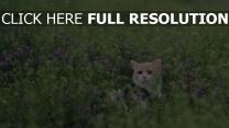 blick gras blumen katze spaziergang