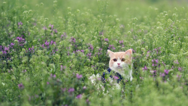 hd hintergrundbilder blick gras blumen katze spaziergang