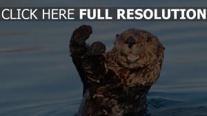 tier nass wasser otter