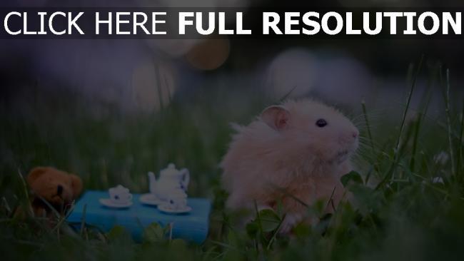 hd hintergrundbilder flaumig spielzeug gras hamster
