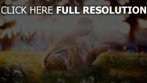 spielerisch seife blasen hund sonnenlicht