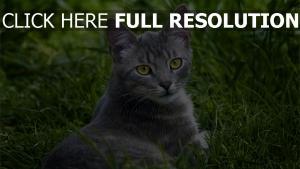 blick gras liegend katze