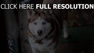 schauen hund maulkorb heiser hundehalsband