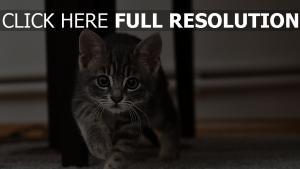 gestreift ansicht überraschung kitty