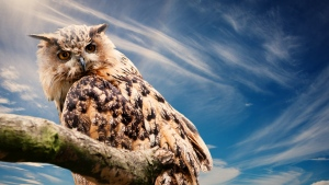himmel raubtier vogel eule