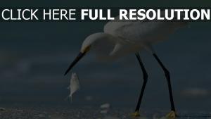 strand fisch vogel reiher