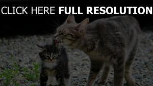 kies kätzchen stein katze
