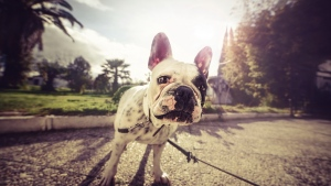 schauen hund maulkorb bulldog leine