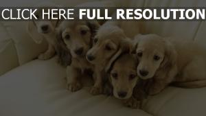 freunde welpen hunde