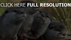 ansicht tiere otter