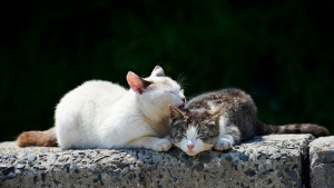 pflege paar zuneigung katzen frühling