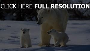 familie bären schnee weiß spaziergang