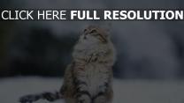 flaumig schnee augen katze