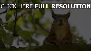 lustig gesicht sitzen eichhörnchen