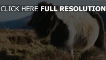 pferd langhaarigen pony