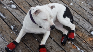 spaziergang lügen schuhe hund