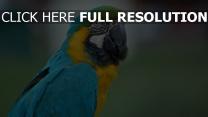 farbe aras federn papagei