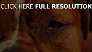 nah gesicht augen hund plan