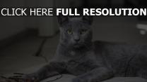 liegen graue katze