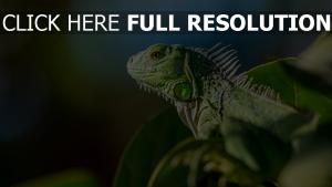 laub reptil farbe eidechse