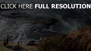 vogel strand wellen meer