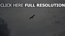 himmel flug wolken vögel
