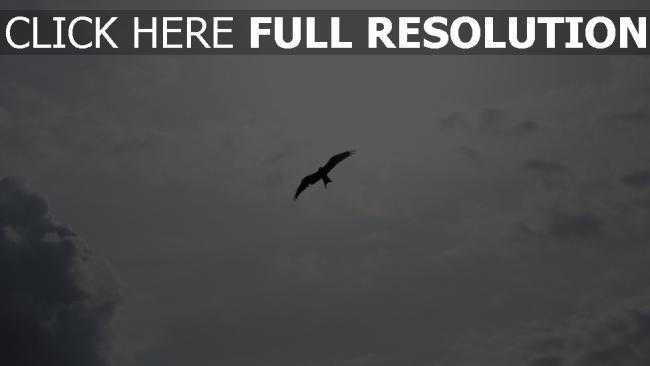 hd hintergrundbilder himmel flug wolken vögel