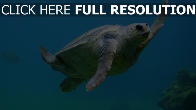 hd hintergrundbilder unterwasser schwimmen meeresschildkröte