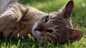 gras maulkorb lügen katze ruhe