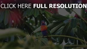 vogel tropisch papagei