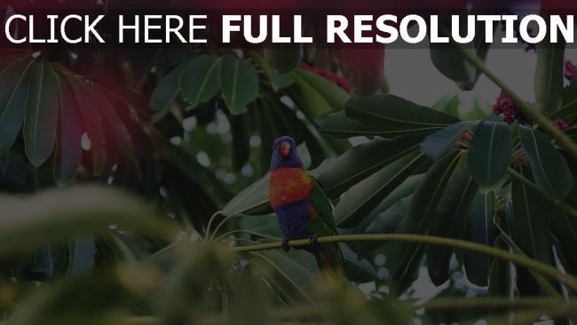 hd hintergrundbilder vogel tropisch papagei