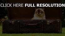 koffer antike katze