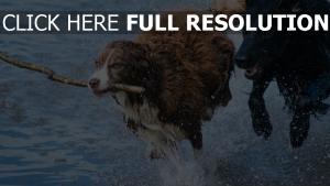 spray stick laufen hund verspielt