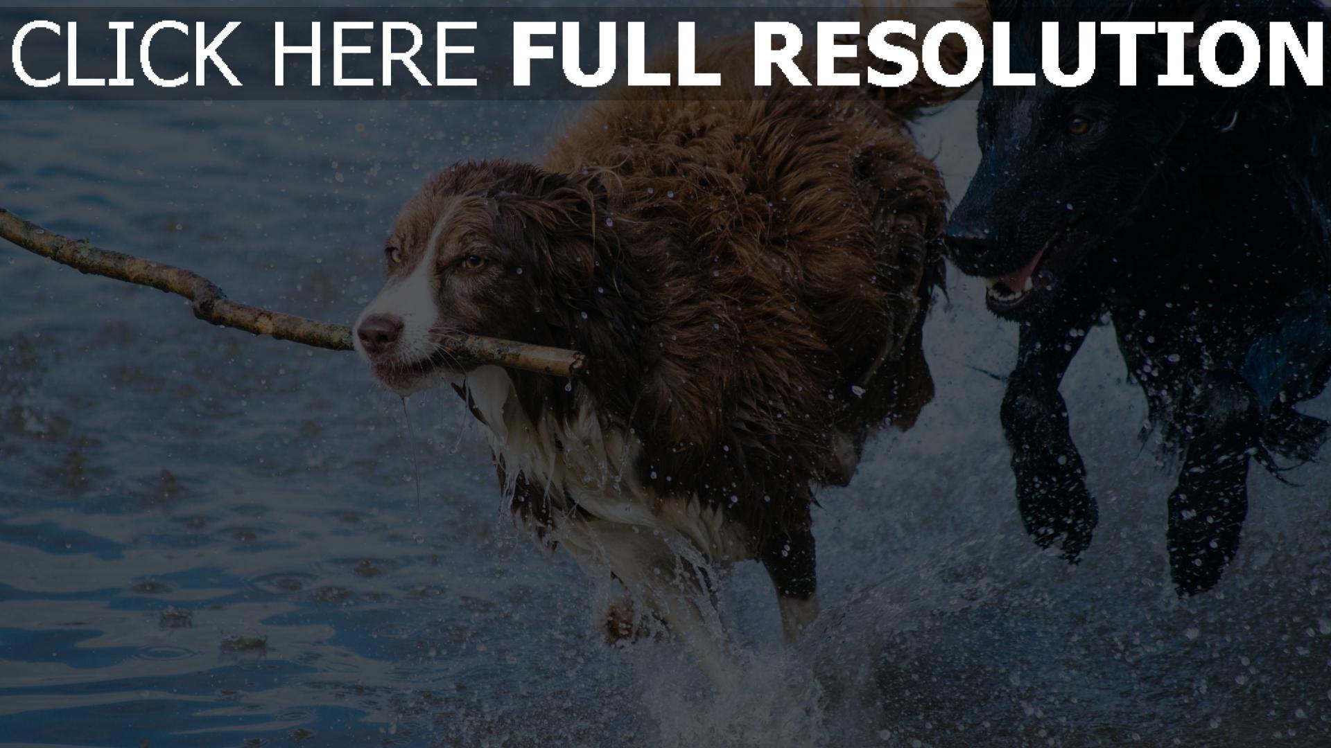 hd hintergrundbilder spray stick laufen hund verspielt 1920x1080