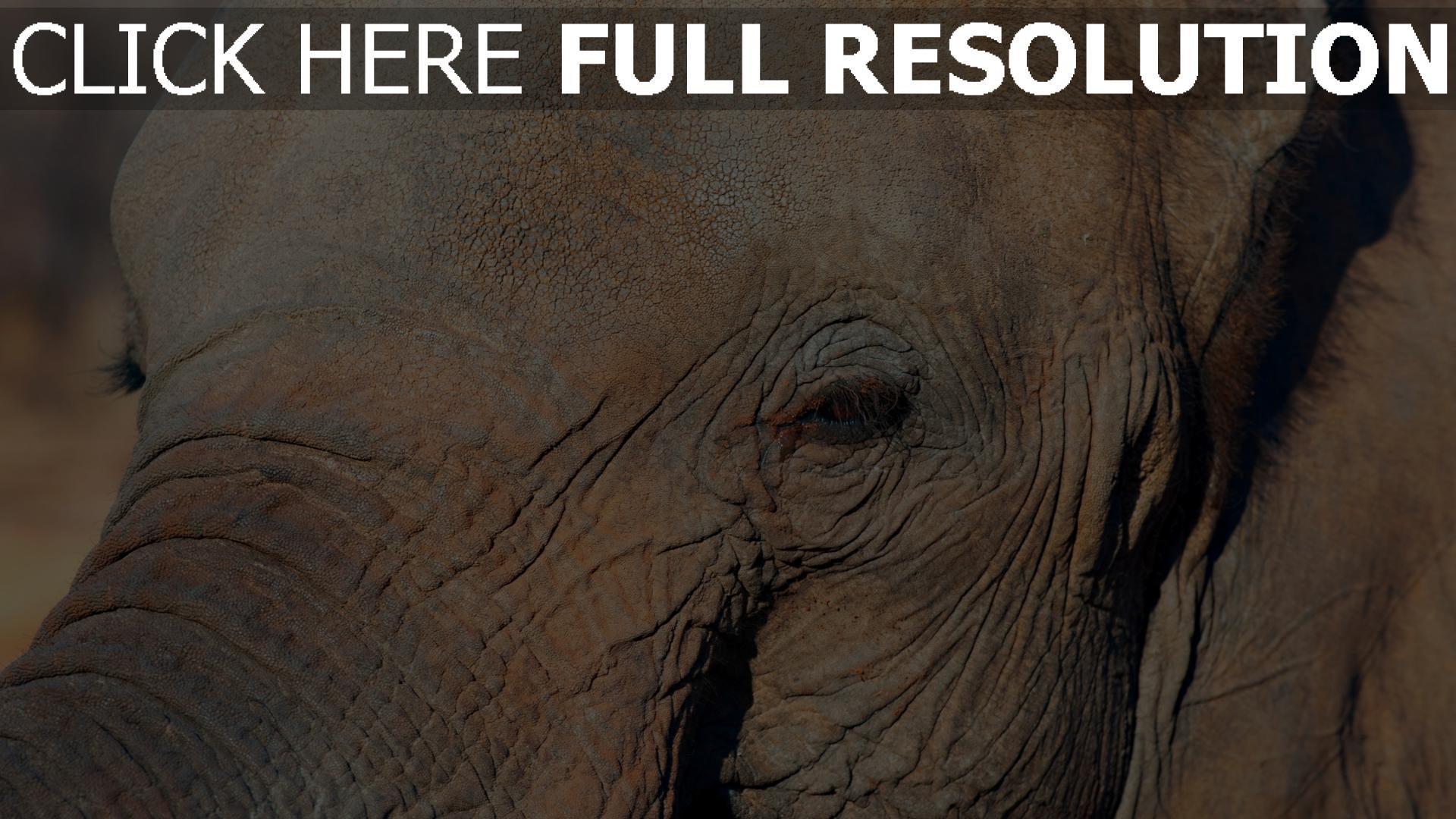 hd hintergrundbilder gesicht auge elefant 1920x1080