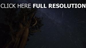 baum himmel nacht sterne meteoriten
