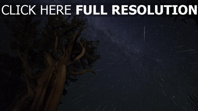 hd hintergrundbilder baum himmel nacht sterne meteoriten